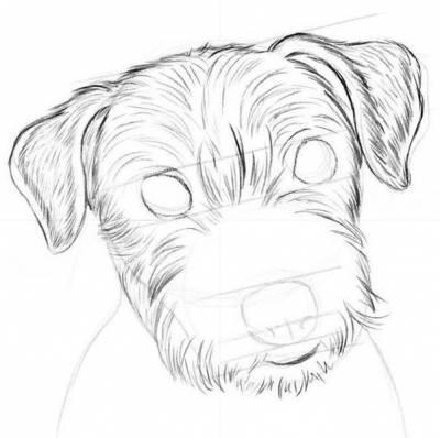 draw a dog 4