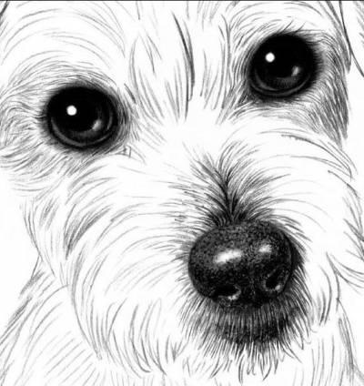 draw a dog 6