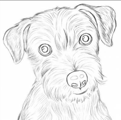 draw a dog 5